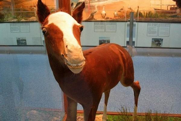 Le cheval trop mignon (ou pas)