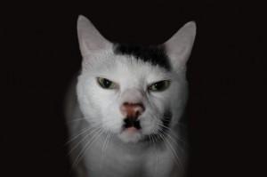 Voter pour 7 - Snowball The Kitler Cat
