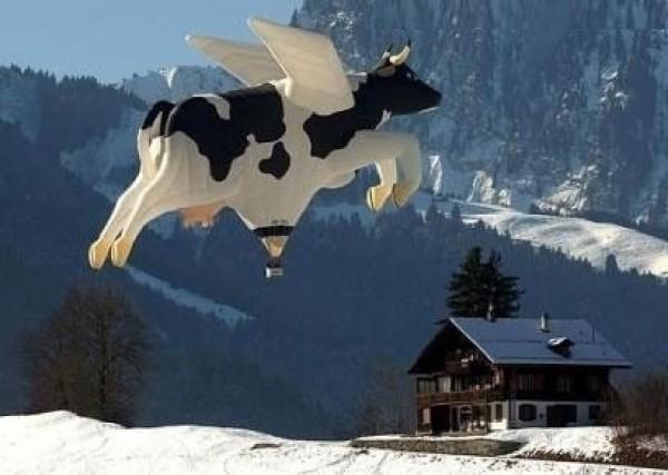 Vache ailée