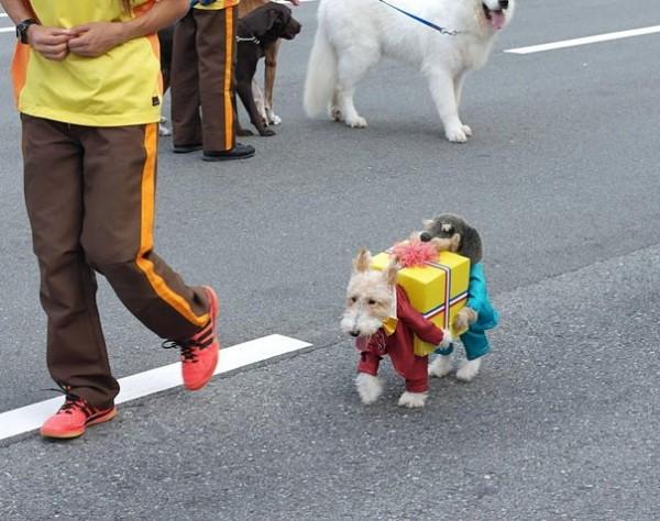 Double chien porteur de cadeaux