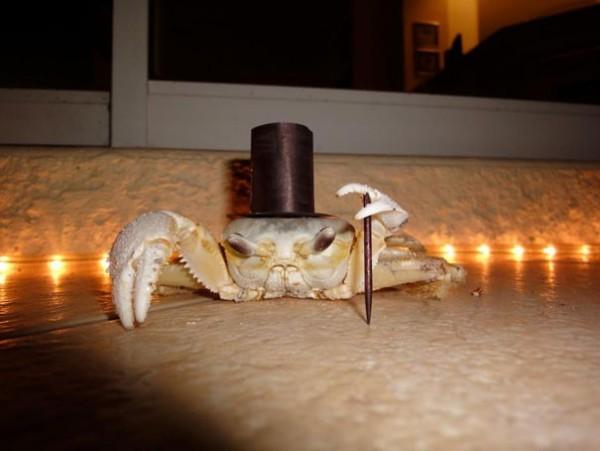 Crabe Jet Set