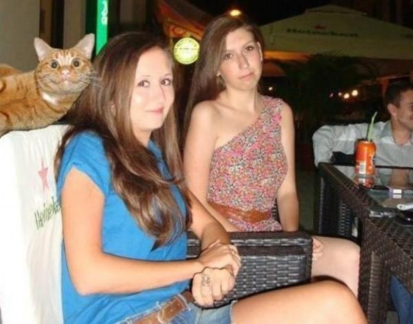 photobomb d'un chat de bonne humeur