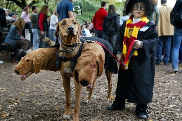 Harry Potter (protection kidnapping)
