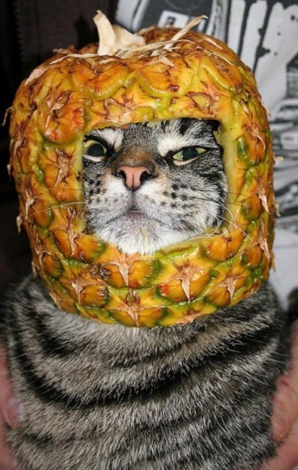 casque ananas