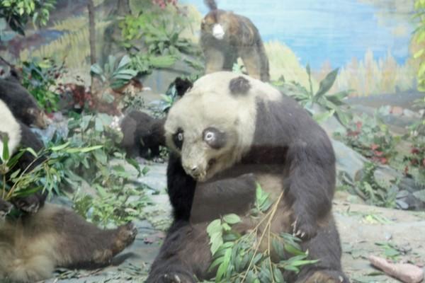 Le Panda WTF