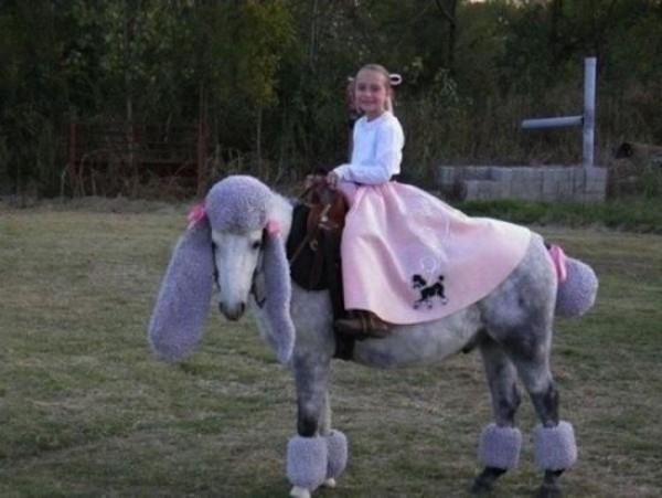 cheval caniche