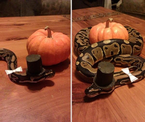 Serpent classe