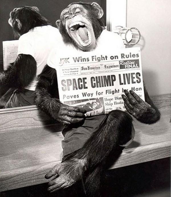 1961 : Un singe de d'espace prend la pause suite au succès de sa mission