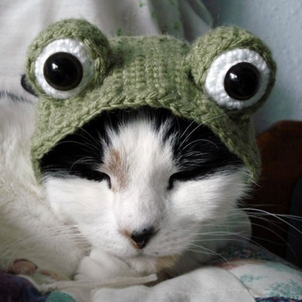 Chat Grenouille