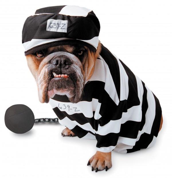 prisonnier pas content