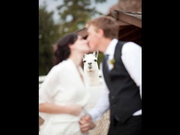 Le meilleur photographe de mariage