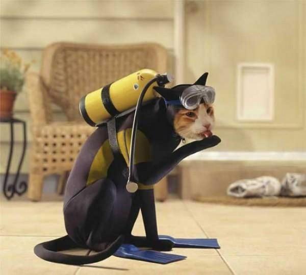 chat plongeur