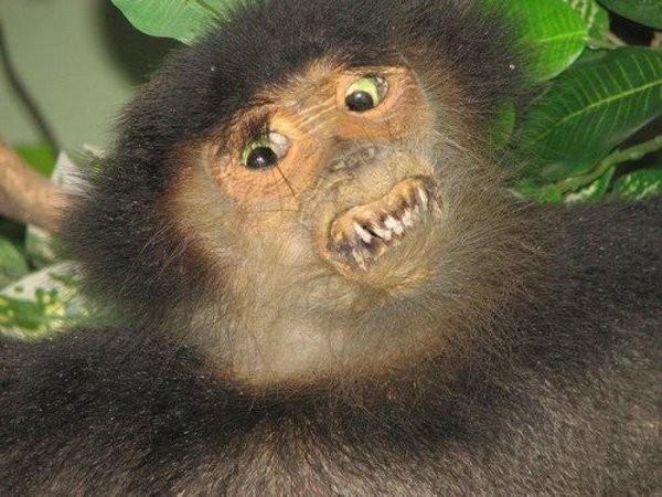 Le joli petit singe tout mignon