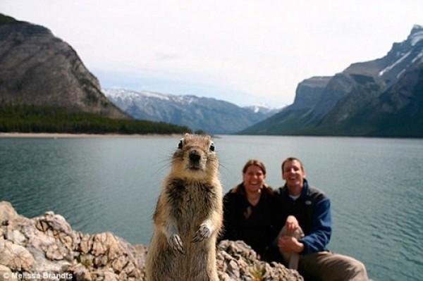 photobomb d'un écureuil