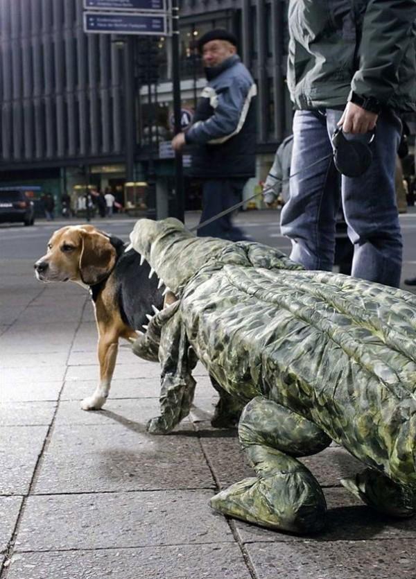 Chien Crocodile