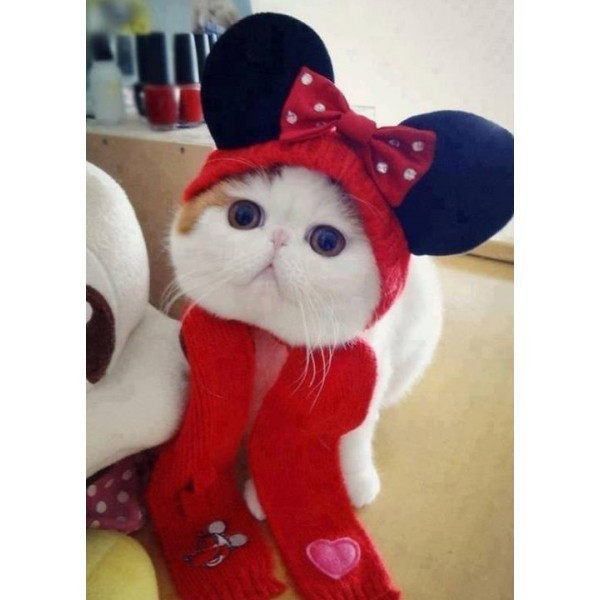 chaton minnie