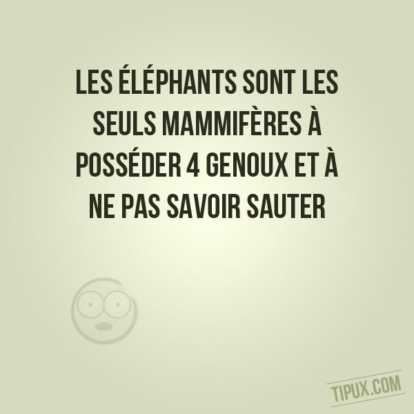 Les éléphants sont les seuls mammifères à posséder 4 genoux.