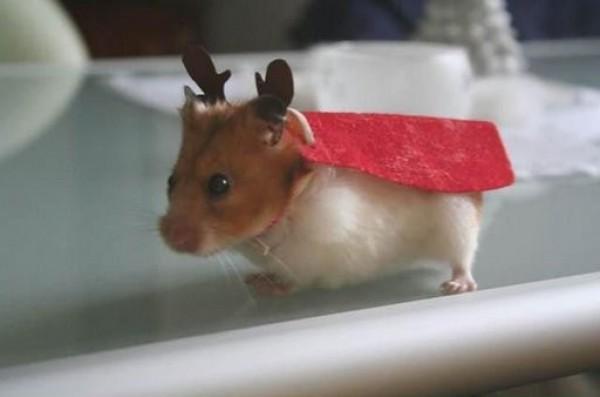 hamster renne du père noël