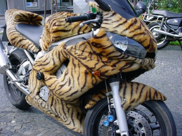 Trop fan de tigres