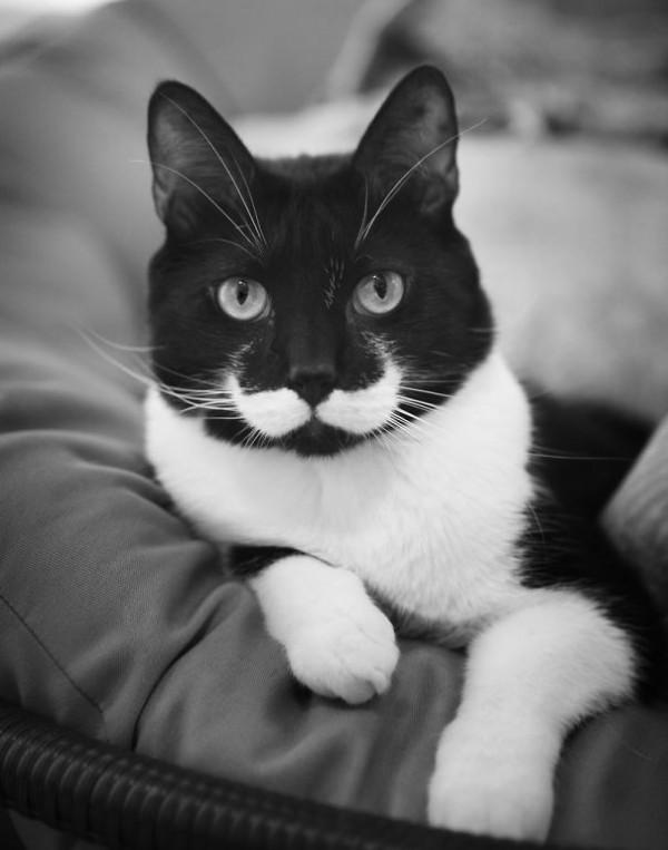 6 - Moustache Cat