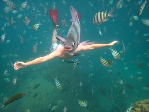 un poisson qui a parfaitement réussi son photobomb
