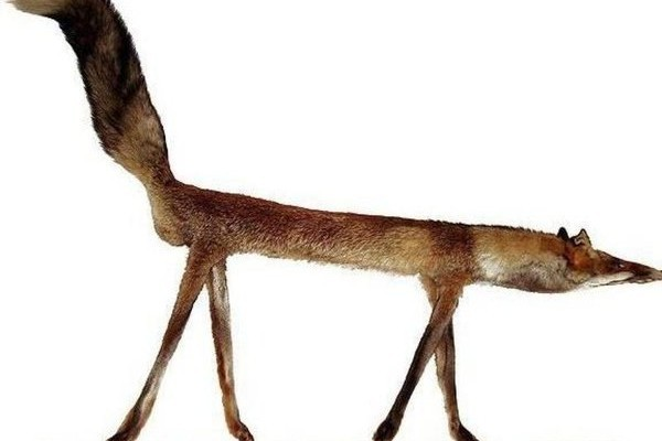 Le panneau indicatif ou renard ?