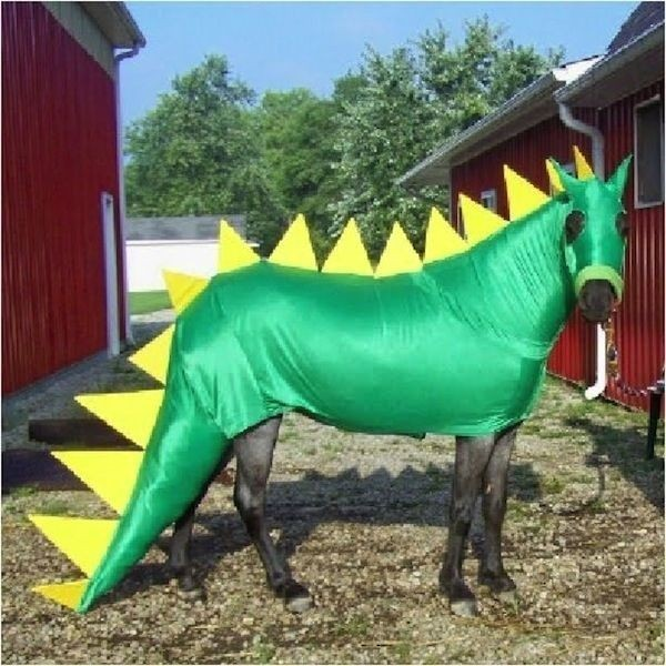 cheval dragon