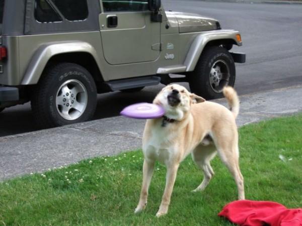 le frisbee c'est pas son truc