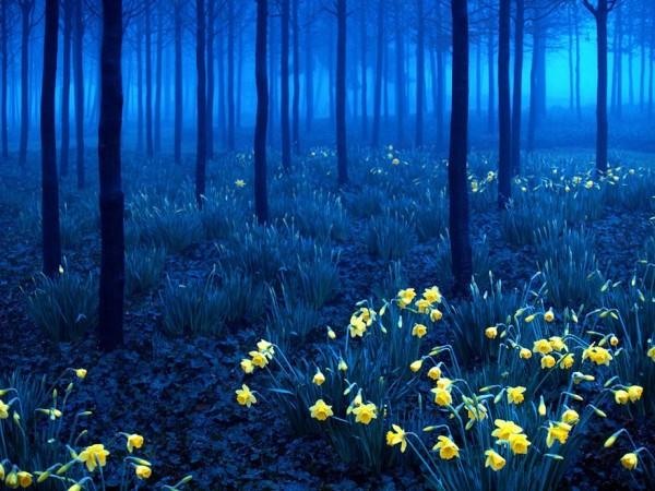Allemagne - Forêt noire