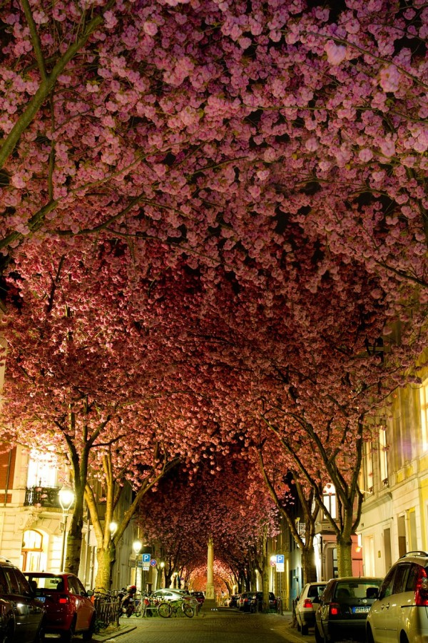 Allemagne - Une rue de Bonn