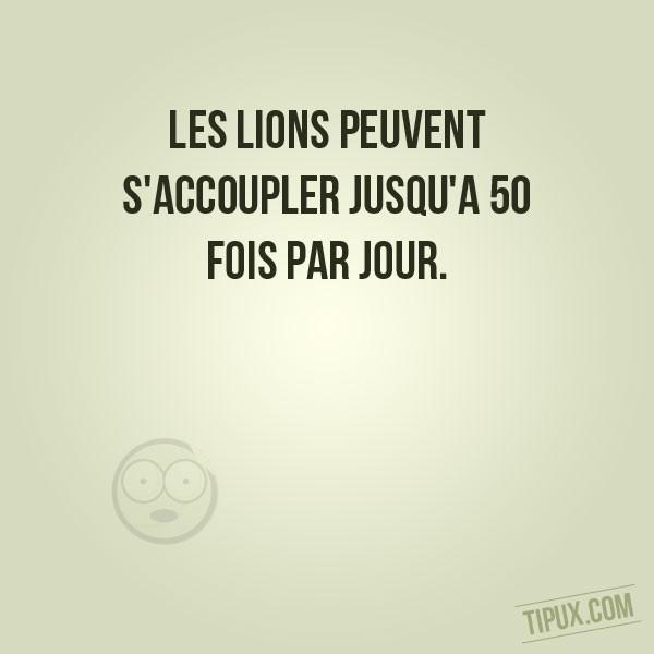 Les lions peuvent s'accoupler jusqu'à 50 fois par jour.