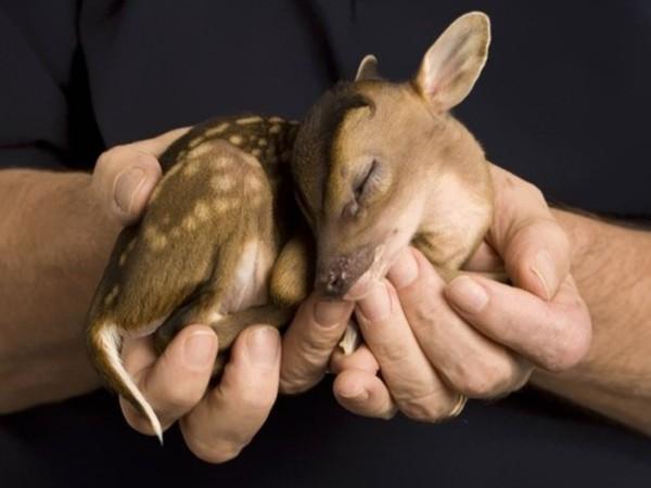 Bambi (oui le vrai)