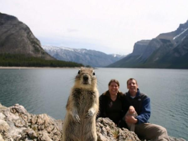 un écureuil qui s'est invité devant un couple d'Américains prenant la pose