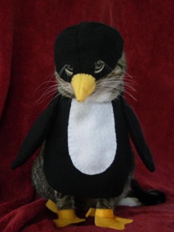 chaton pingouin
