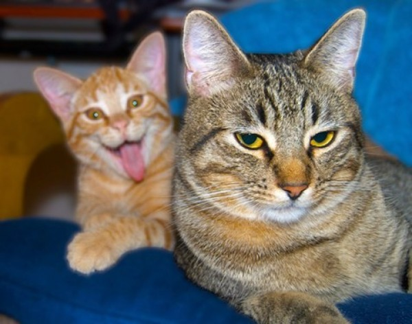 photobomb d'un chat farceur