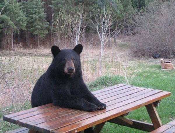 J'attends le repas !