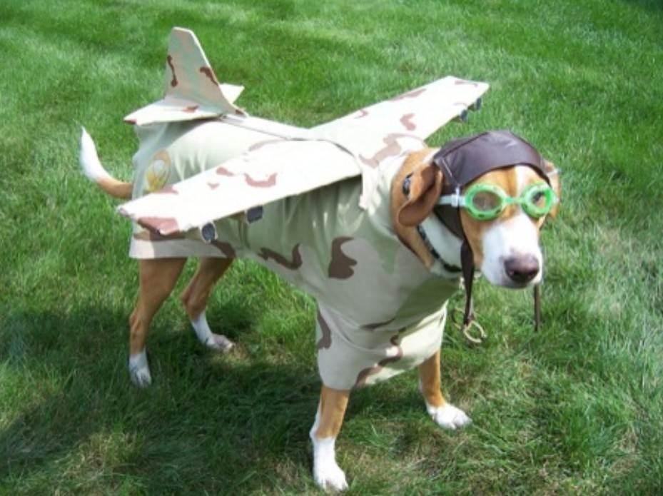 Chien Volant top 80 : des déguisements ridicules pour animaux