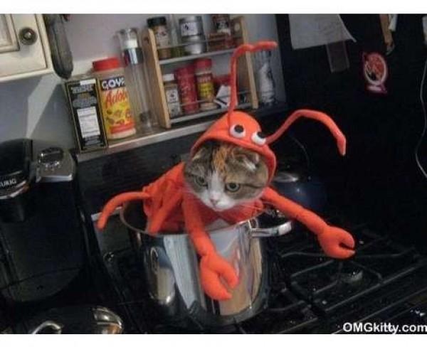 homard a la casserole