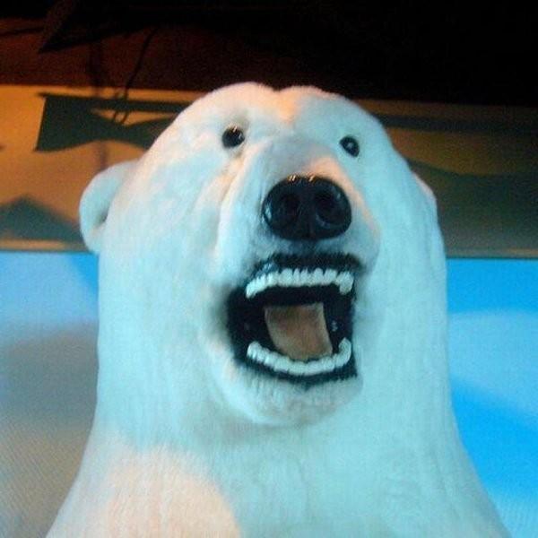 l'ours avec des dents