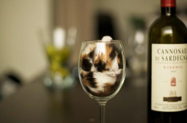 Version vin
