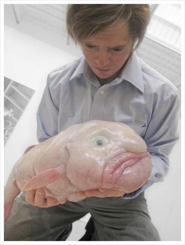 Blobfish, poisson le plus laid au monde