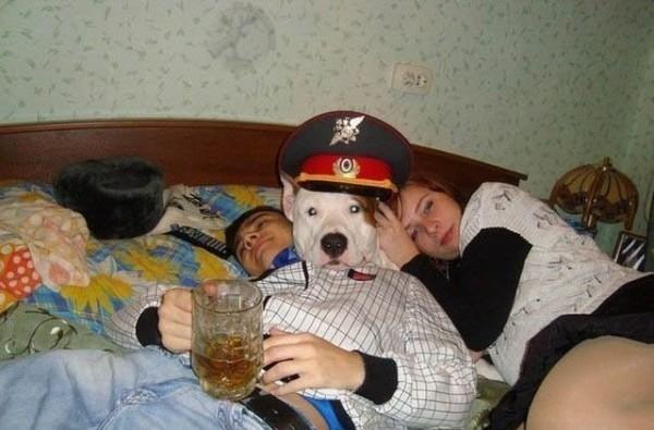 Non d'un chien