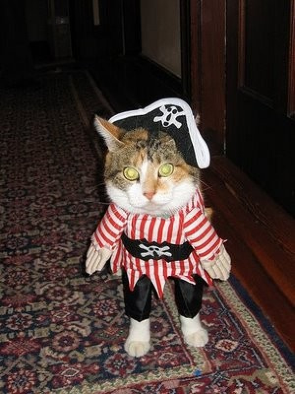 chat pirate