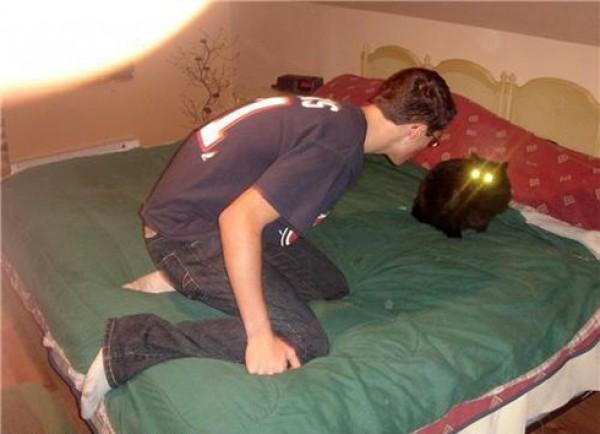 Gentil le chat