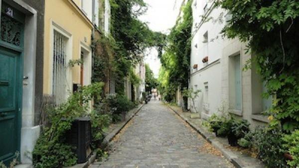 Jungle urbaine  rue des Thermopyles (14ème)