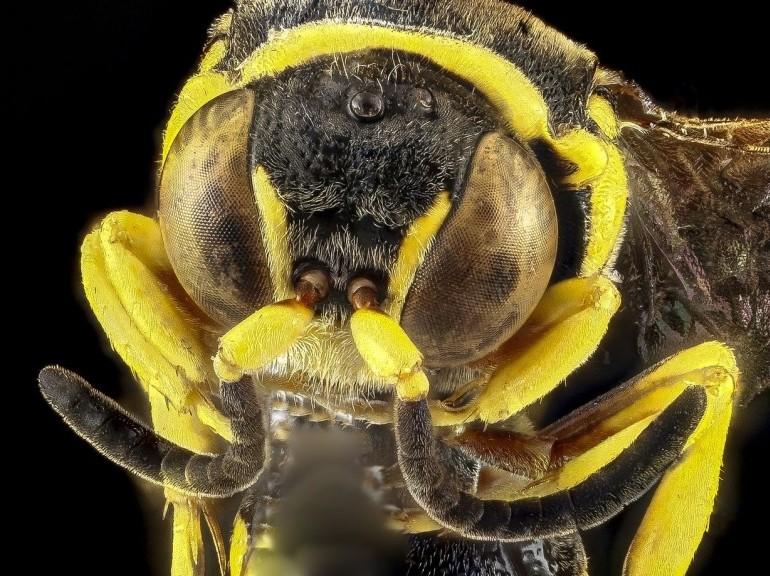 Все о насекомых и пауках