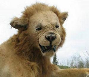 Voter pour Le lion du Mordor