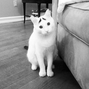 Voter pour 2 - Sam  The Cat With Eyebrows