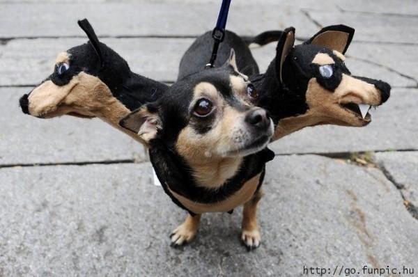 chien à trois têtes