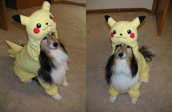 chien pikachu